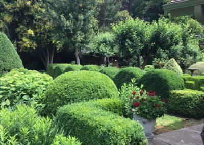 Elegant boxwoods and hydrangeas for a creative mature garden