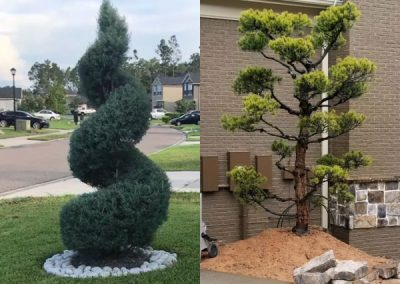 topiary courtyard plants