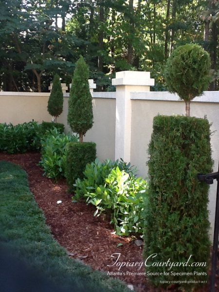 Thuja shapes to add whimsy to the garden