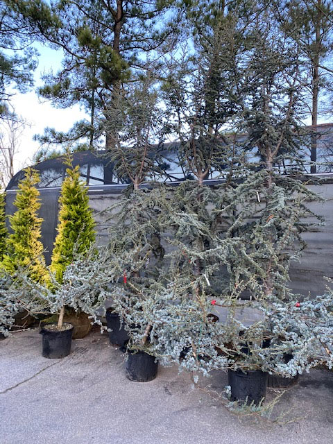 Topiary Courtyard's New Spring 2020 plant line-up!