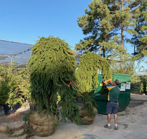 New Fall Conifer Truck with New Topiaries!